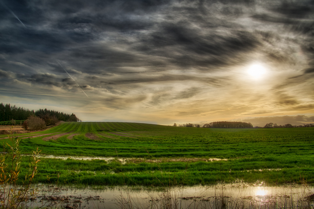 Willamette Valley Farmland #2