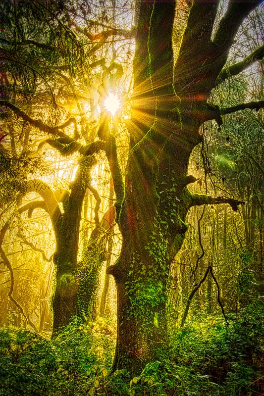 Sunbeams