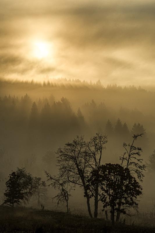 Magical Fog