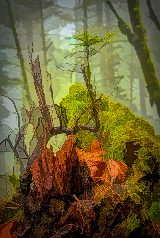 Interesting Forest Art (painterly)