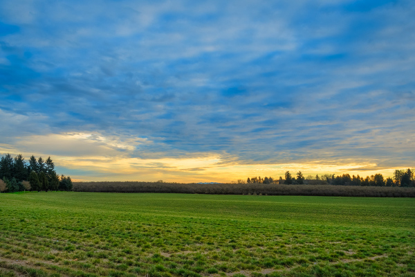 """Farmland Along the Willamette River"""