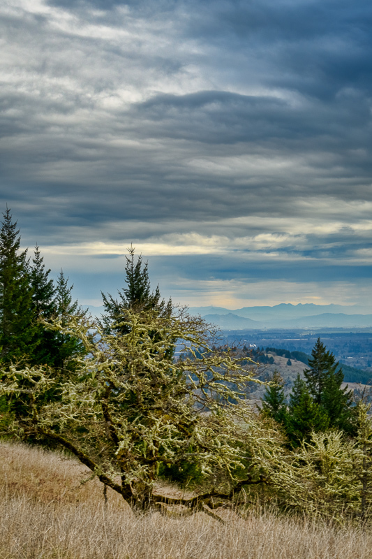 """Looking Toward the Cascades (from Fitton Green)"""