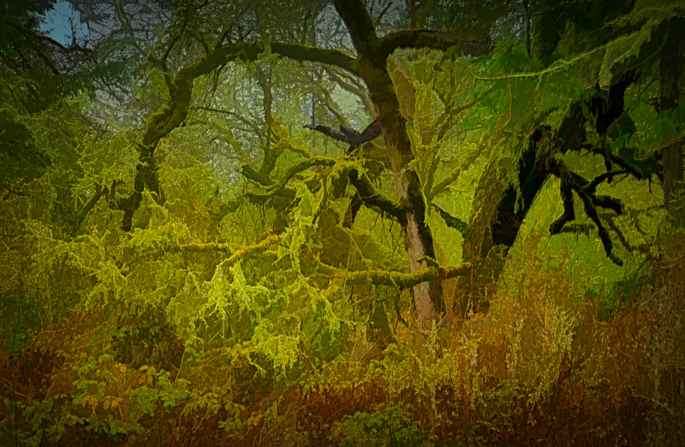 """Cool Nature Graphic"" painterly"