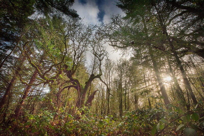 """Witham Hill Natural Park, 16mm"""