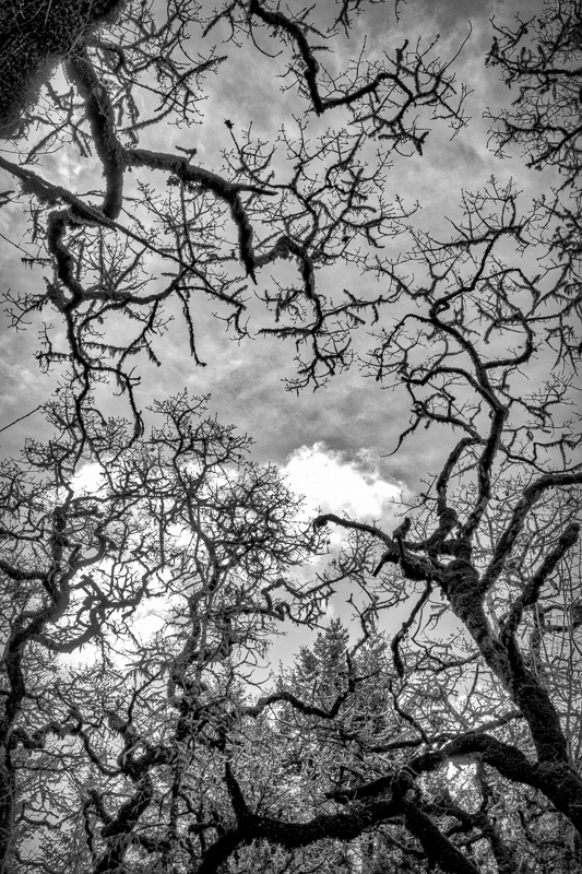 """Looking Up WNP BW"""
