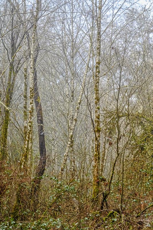 Mulkey Creek Fog