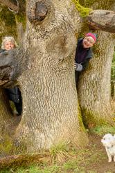 """Iconic Climbing Tree"""