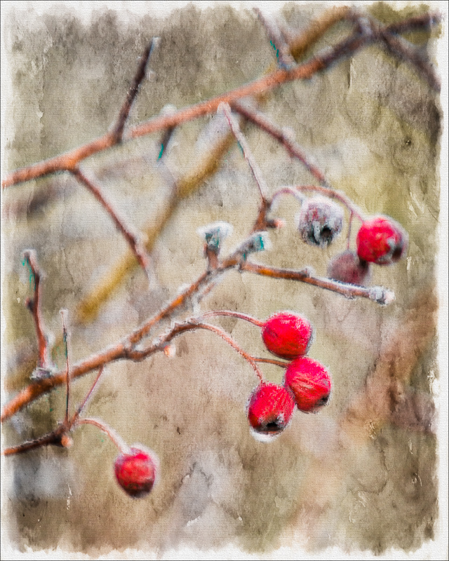 """Frosted Berries"" (painterly)"