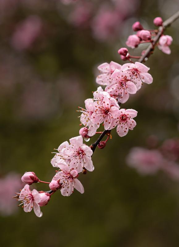 """""""Spring Pink"""""""