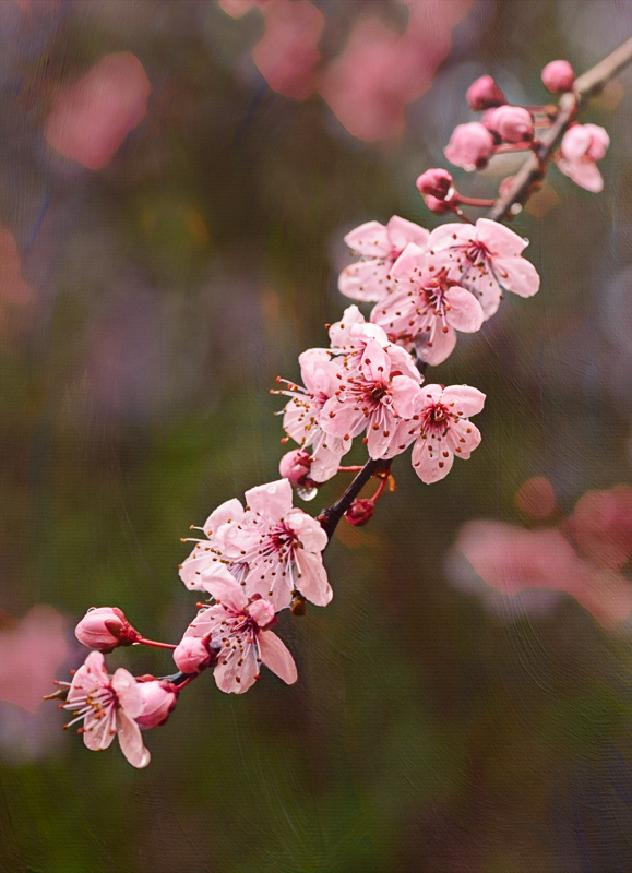 """""""Spring Pink Painterly"""""""