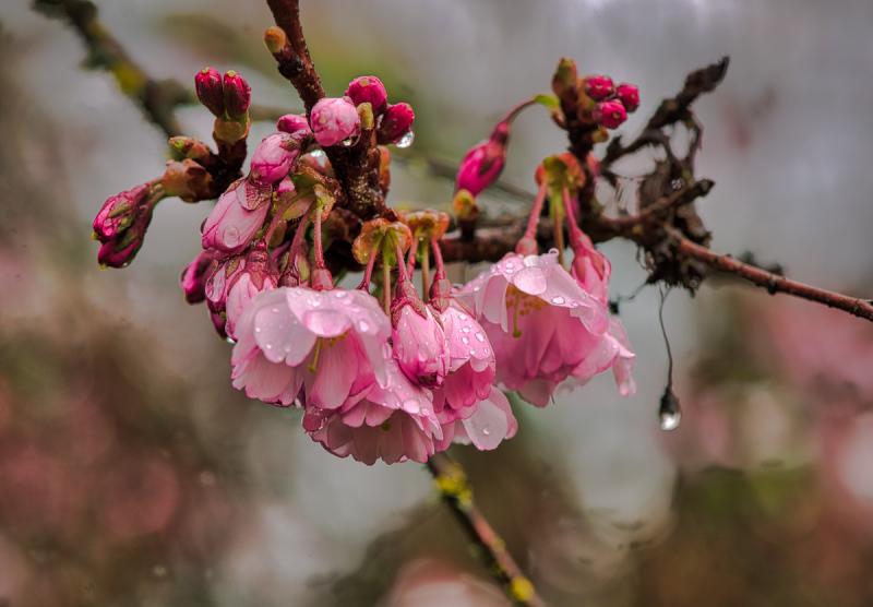 """Gorgeous Pink"""