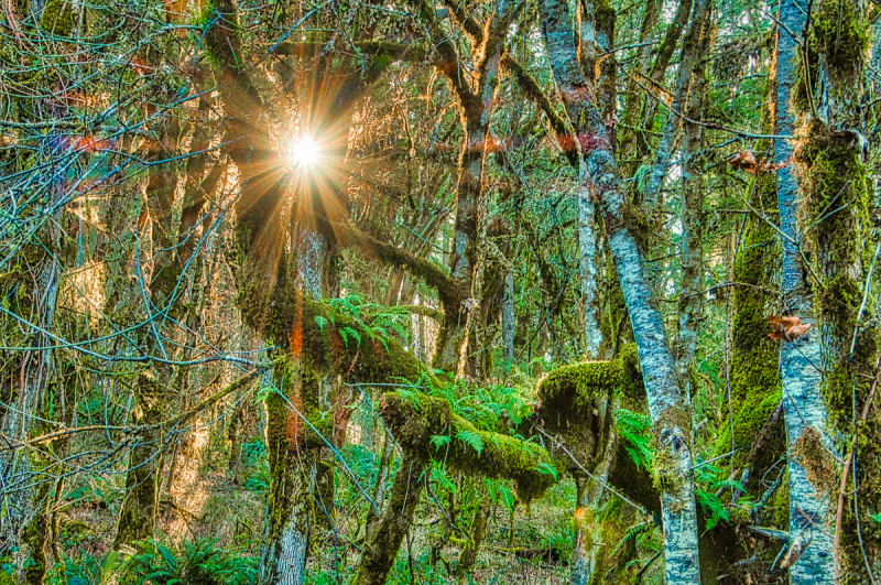 """Shining Thru Forest"""