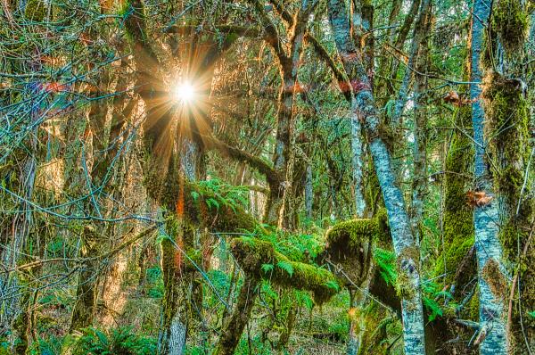 """Shining Thru Forest"""