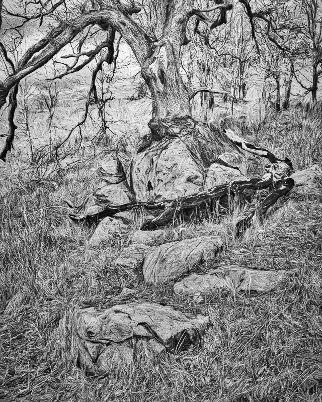"""Rock Path to My Tree, painterly BW"""