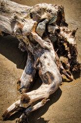 Driftwood Art #2