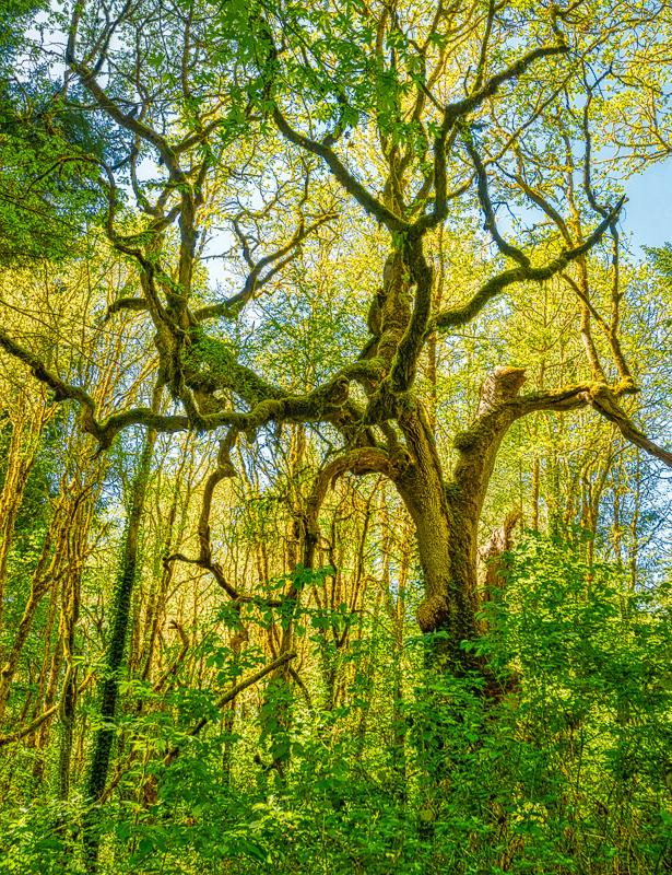 """WNP Wabi Sabi Tree, Spring"""