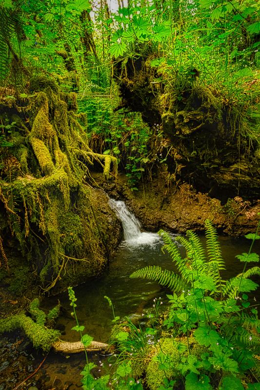 Upper Jackson Creek