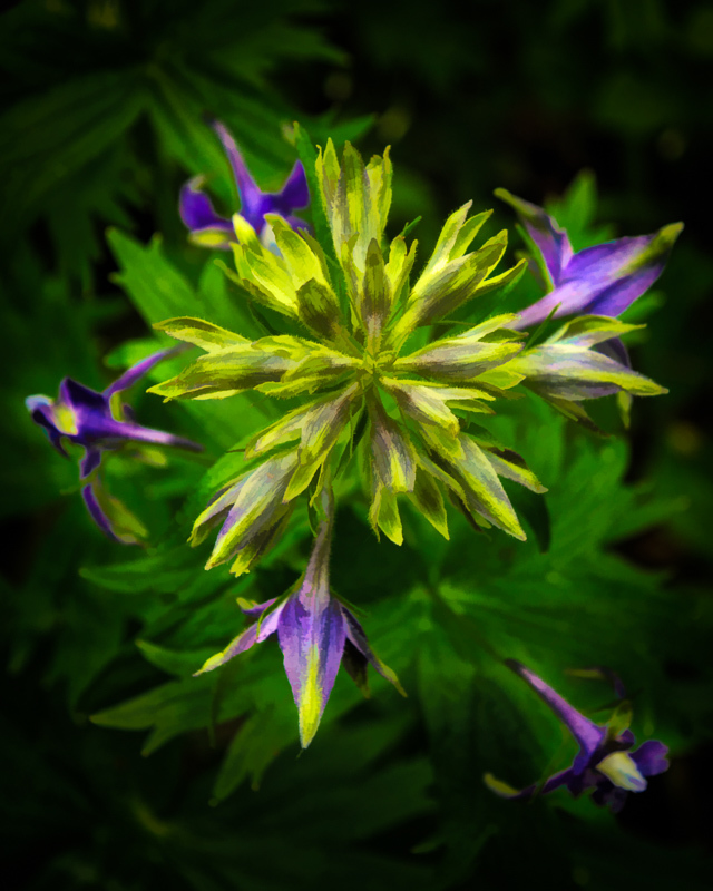 """Larkspur, painterly"""
