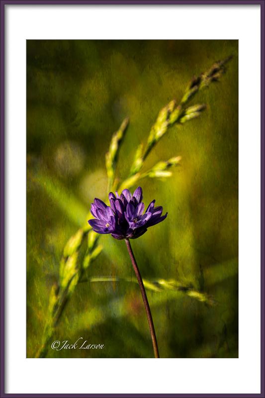 """""""Lovely Purple"""""""