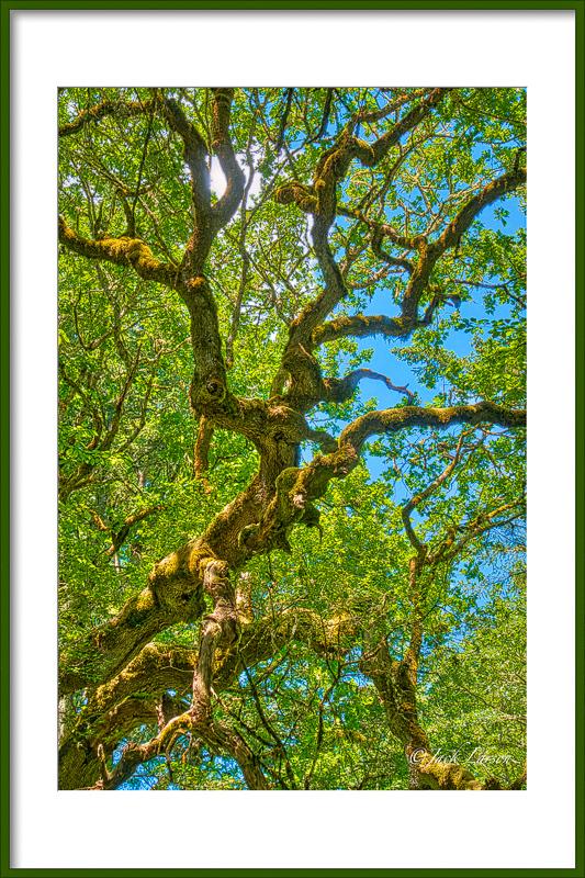 Wonderful Witham Hill Natural Park Wabi Sabi Tree