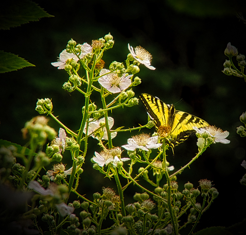 """Butterflies at Bald Hill Farm"""
