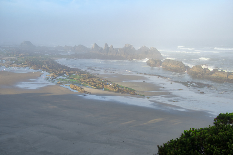"""Low Tide on a Foggy, Magical Morning"""