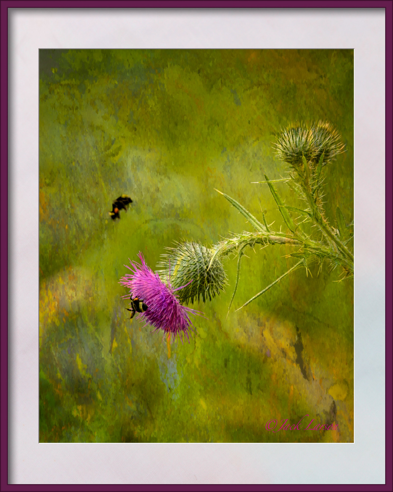 """Thistle & Bees"""