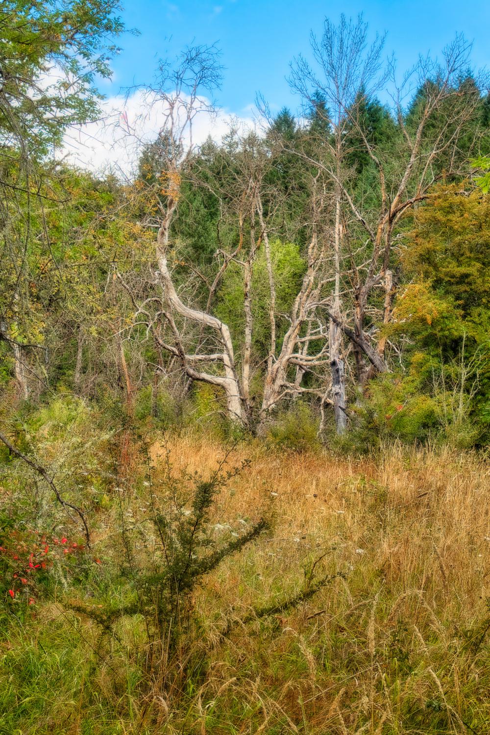 """Wabi Sabi Trees & Color"""