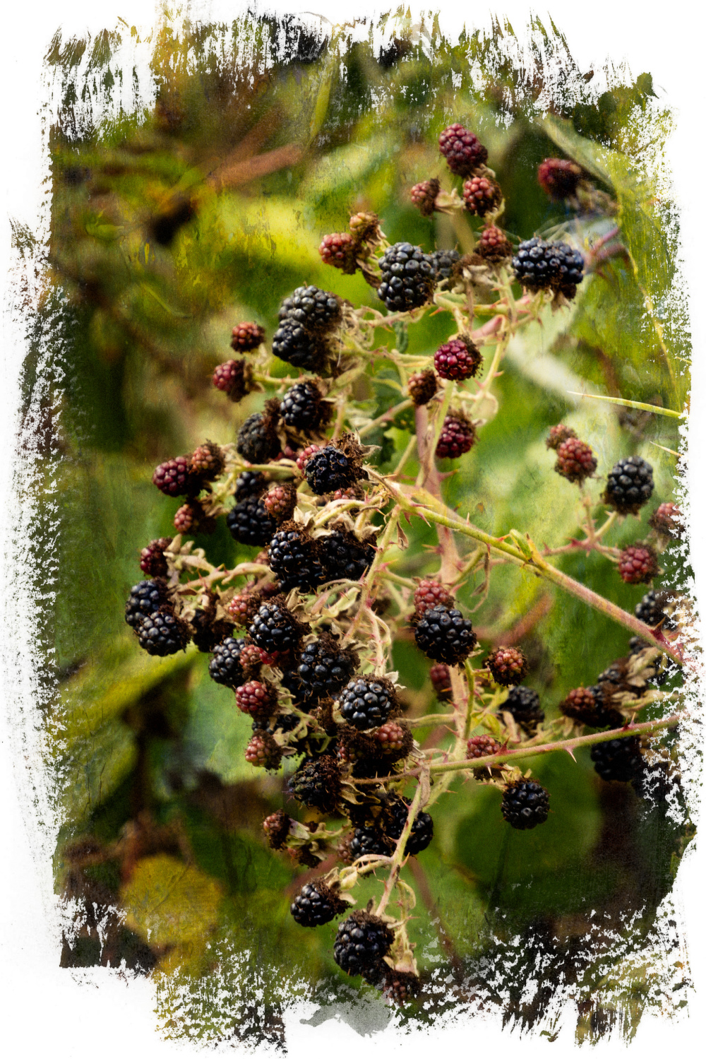 """Blackberries"""