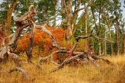 """Color Amidst Wabi Sabi Trees"""