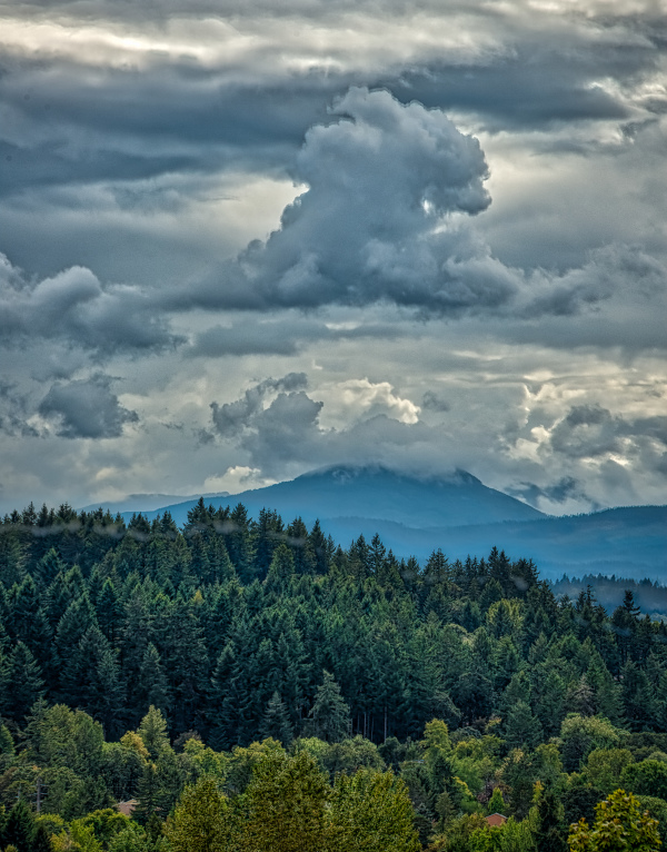 """Rain Cap Over Mary's Peak"""