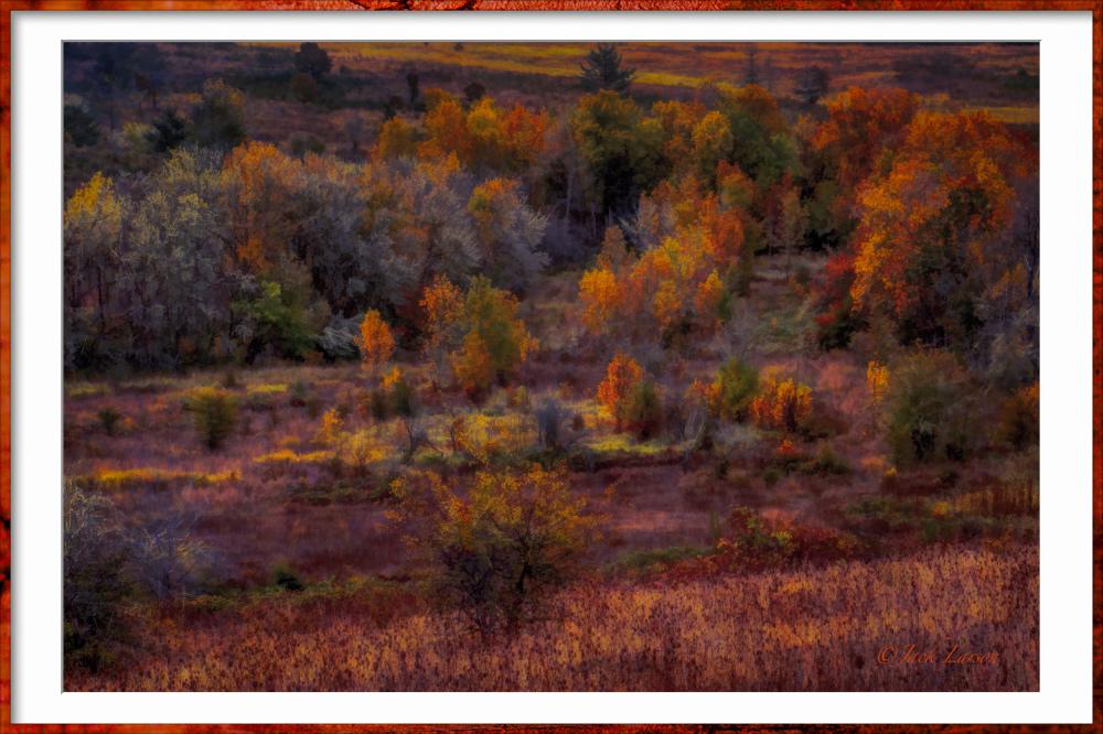 """Timberhill Natural Area Autumn Painting"""