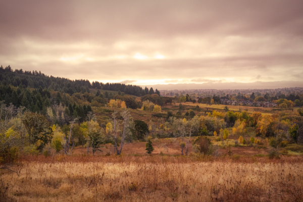 """Timberhill Natural Area Overlook #2"""