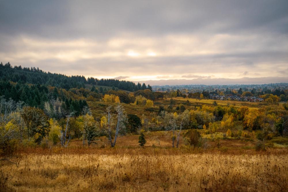 """Timberhill Natural Area Overlook #3"""