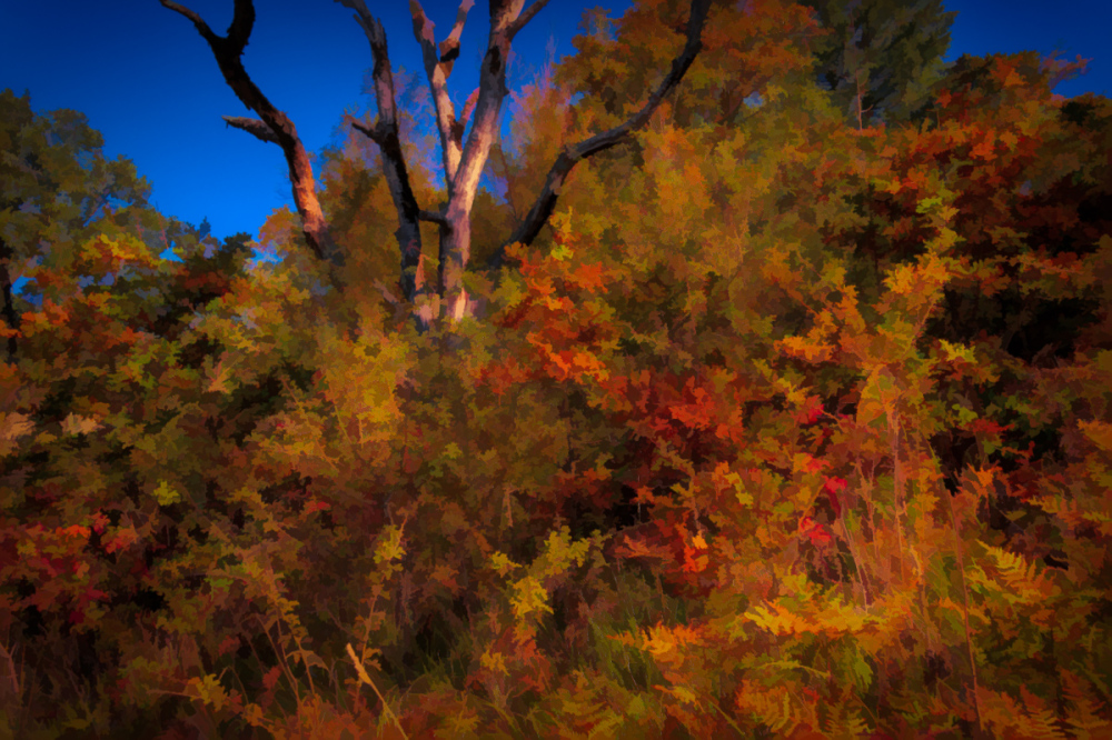 """Upper TNA Trail, Painterly"""