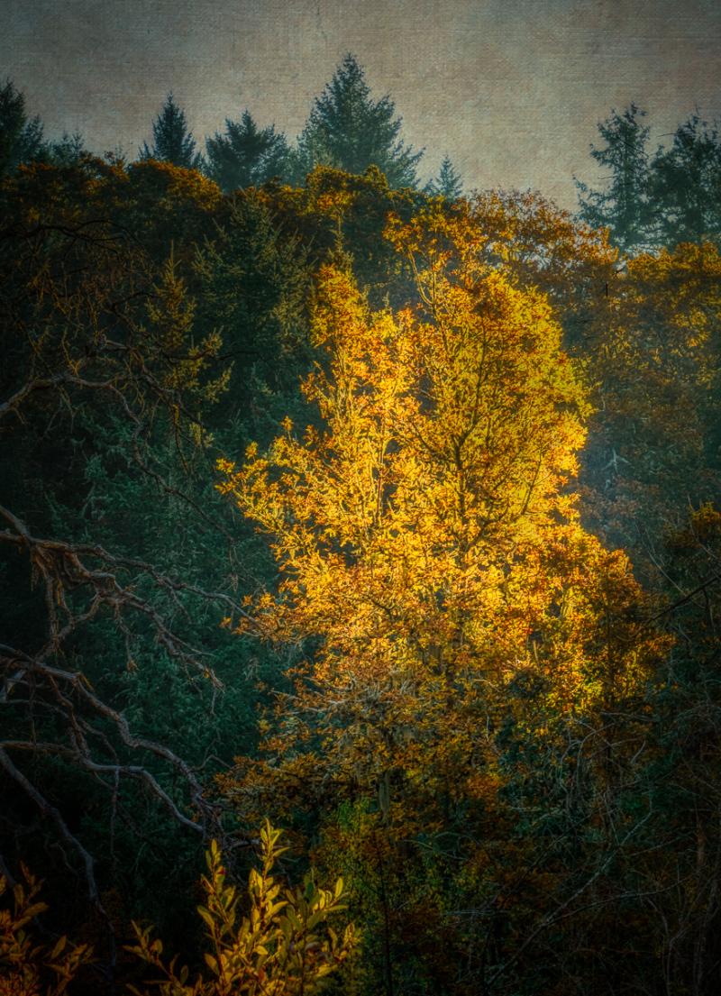 """""""Hillside Spotlight"""""""