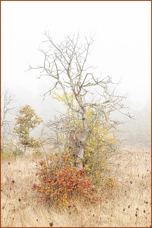 """High Key in the Fog"""