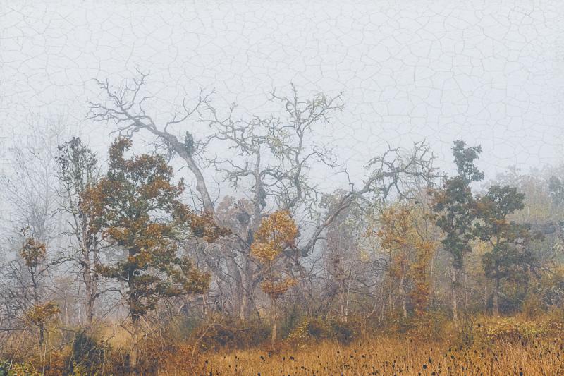 """Wabi Fog Art"""