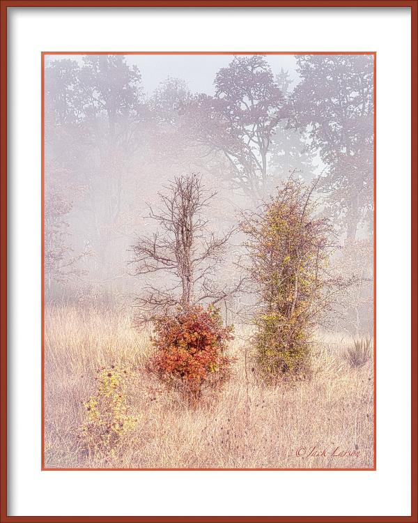 """In the Fog, High Key"""