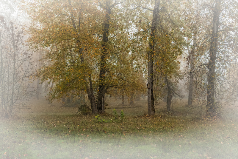 """""""Riverfront Park in the Fog"""""""