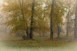 """Riverfront Park in the Fog, Painterly"""