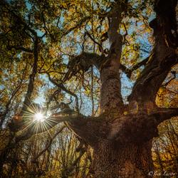 """""""Sunburst Thru Nobby Tree"""""""