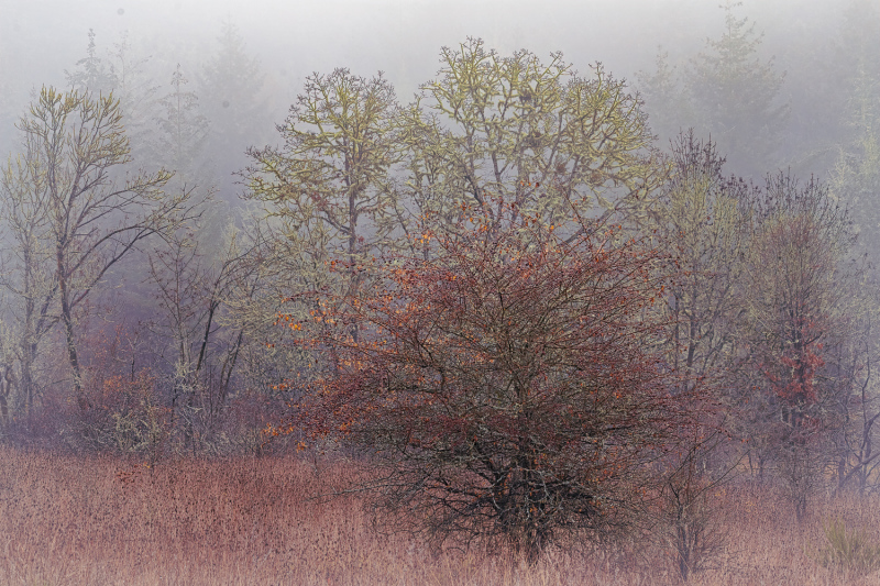"""Fog Follows Rain"""