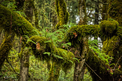 """Ferns, Moss, Lichen"""