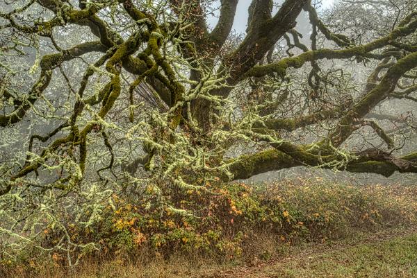 """Wabi Dog Pk Tree Up Close"""