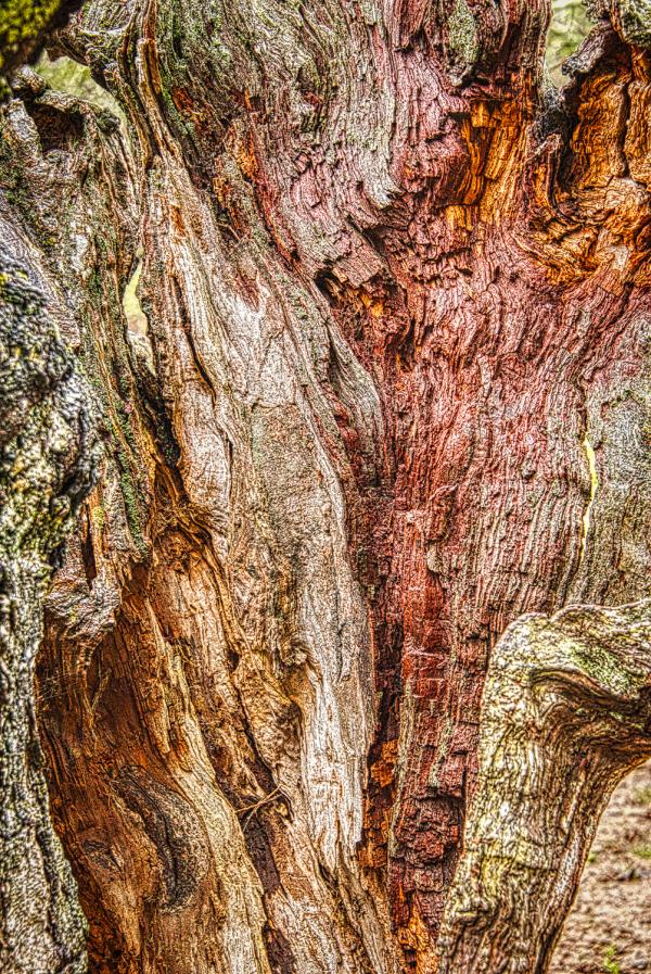 """Inside of Wabi Stump #2"""