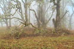 """Wabi Sabi in the Fog"""