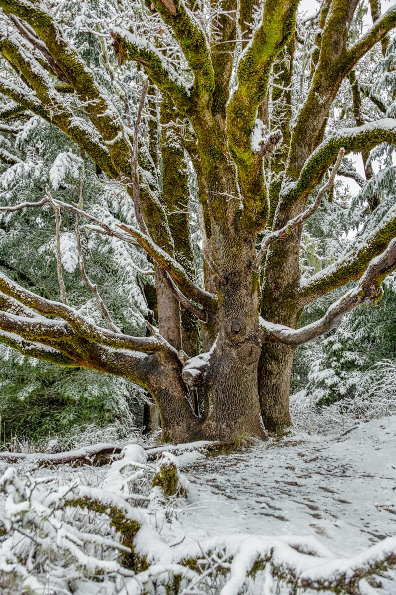 """""""Fitton Green Super Tree"""""""