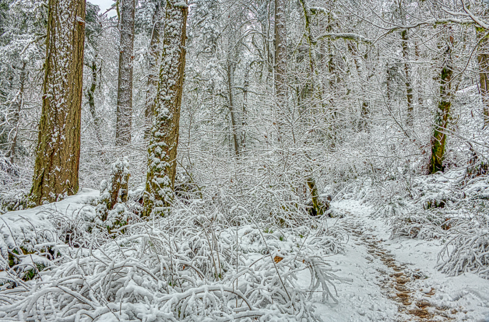 """Winter Display in the Old Growth Forest"""