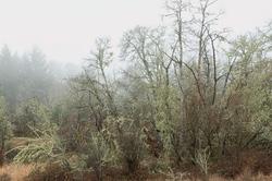 """""""Mystical Winter Fog"""""""